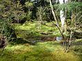 Moss Garden, Bloedel Reserve.jpg