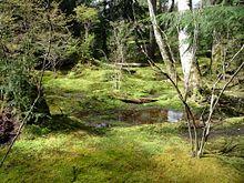Moss Wikipedia