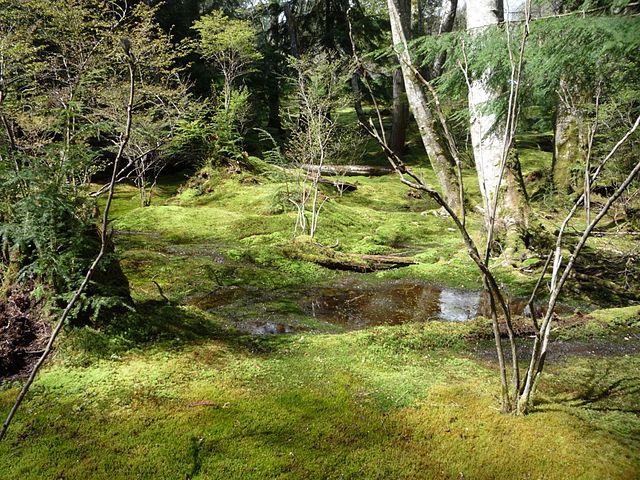 Machy v zamokrenom lese