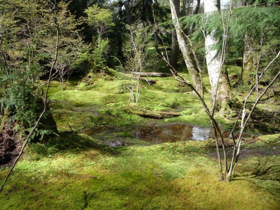 Moss Garden, Bloedel Reserve