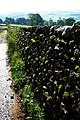 Moss Growing on Drystone Wall. - geograph.org.uk - 566964.jpg