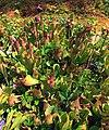 Mountaintop Bog (5) (9338020383).jpg