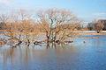 Muldehochwasser k5.jpg