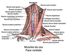 Fait mal une gauche partie du cou et le dos