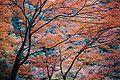 MyPhotoKyoto0631.JPG