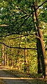 Mystic River Path On A Summer Evening 2 (164388545).jpeg