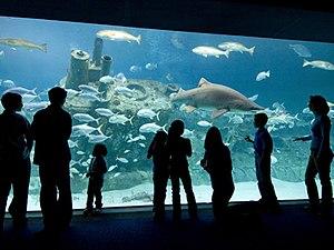"""North Carolina Aquariums - A """"Live Dive!"""" program at the North Carolina Aquarium at Pine Knoll Shores."""