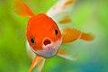 NEW FISH!!! 2 (4694899147).jpg