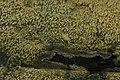 NSG Hiesfelder Wald 02.09.2017 Mushroom (37289415960).jpg