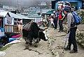 Namche Bazaar-52-Tourist mit Rind-2007-gje.jpg