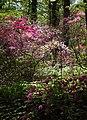 National Arboretum in April (23277818790).jpg