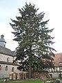 Naturdenkmal Landkreis Kassel 6.33.831 2017-05-07 c.JPG