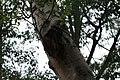 Nature 190628-WA0050.jpg