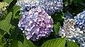 Natures Bouquet (153206705).jpeg