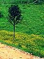 Natureza em Porto Alegre (RS) (5093937159).jpg