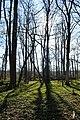 Naturschutzgebiet Haseder Busch - Im Haseder Busch (46).jpg