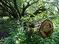 Naturschutzgebiet Heuckenlock 21.05.2014 Phase 105.JPG