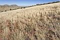 Near Big Gyp Mountain - Flickr - aspidoscelis.jpg