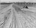 Near Eloy, Pinal County, Arizona. Shows bulldozer levelling more desert land for irrigation in Eloy . . . - NARA - 522221.tif