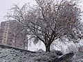 Neige à Bellevue.JPG