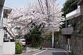 Nekkozaka-Shibuya-02.jpg