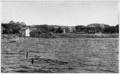 Nelumbo lutea, Sodus Bay, Lake Ontario.png