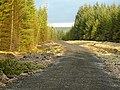 New Track in Whitelee Forest - geograph.org.uk - 1608623.jpg