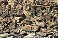 Nimbapura, Karnataka, India - panoramio - Robert Helvie (2).jpg