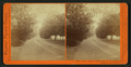 North Avenue, leading from T.H. Selby's Residence, Fair Oaks, Cal, by Watkins, Carleton E., 1829-1916.png