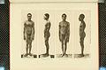Nova Guinea - Vol 3 - Plate 42.jpg