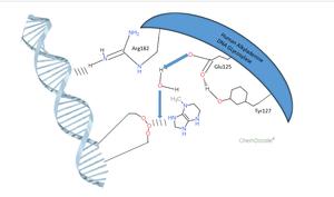 DNA-3-methyladenine glycosylase - N-Glycosidic bond cleavage by Human Alkyladenine DNA Glycosylase