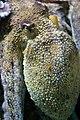 Octopus (11467597746).jpg