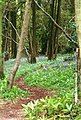 Offa's Dyke Path in Bigsweir Wood - geograph.org.uk - 707638.jpg