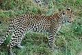 Okavango Delta, Botswana (2685414954).jpg