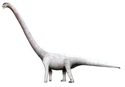 Omeisaurus tianfuensis34.jpg