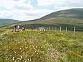 On the path from Scald Hill to The Cheviot - geograph.org.uk - 208743.jpg
