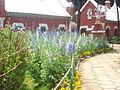 Ooty Botanical garden03.JPG