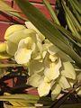 Orchid Flower123.jpg