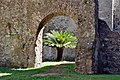 Orsini-Odescalchi Castle - Interior with Cycas.jpg