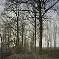 Overzicht van de oprijlaan - Breda - 20385348 - RCE.jpg