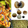 Owoce Longan.jpg