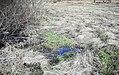 Přírodní památka Tesařov25.jpg