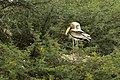 PaintedStork DSC1045.jpg