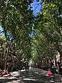 Palma de Mallorca deptak.jpg