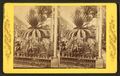 Palms at the Shaw's Garden, Mo, from Robert N. Dennis collection of stereoscopic views.png