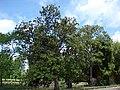 Parc Bordelais, Bordeaux, Aquitaine, France - panoramio (3).jpg
