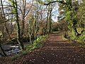 Path between river and leat, Berry's Wood - geograph.org.uk - 1629607.jpg