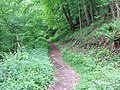 Path through the woods - geograph.org.uk - 809762.jpg