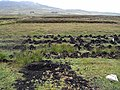 Peat stacks, Owenwee Bog - geograph.org.uk - 1401914.jpg