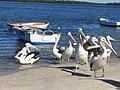 Pelican Waters - panoramio.jpg